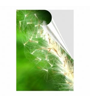 Adesivi formato A4 in PVC per esterno pellicola trasparente